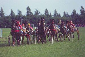 Pferderennen Hooksiel